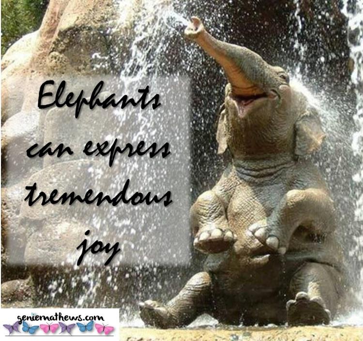 elephant joy IG